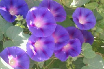http://parvanegiha.persiangig.com/parsplanet/golchin/6/a-25.jpg