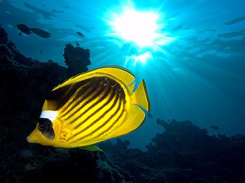 http://parvanegiha.persiangig.com/parsplanet/golchin/8/Under-Water1.jpg