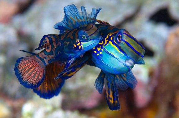 http://parvanegiha.persiangig.com/parsplanet/golchin/8/Under-Water3.jpg