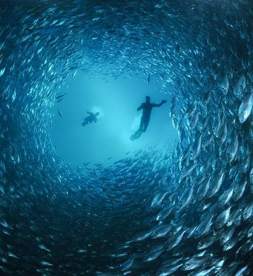 http://parvanegiha.persiangig.com/parsplanet/golchin/8/Under-Water4.jpg