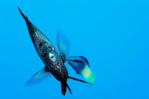 http://parvanegiha.persiangig.com/parsplanet/golchin/8/Under-Water5.jpg