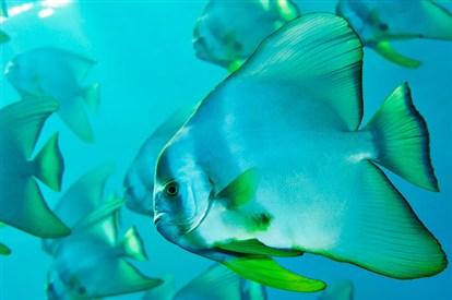http://parvanegiha.persiangig.com/parsplanet/golchin/8/Under-Water6.jpg