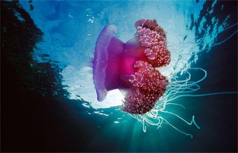 http://parvanegiha.persiangig.com/parsplanet/golchin/8/Under-Water7.jpg