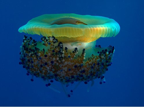 http://parvanegiha.persiangig.com/parsplanet/golchin/8/Under-Water8.jpg
